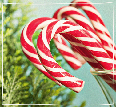 Find the Perfect Candy Canes!
