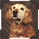Nugget passed away in 2004 but served as the faithful CandyFavorites Mascot for 15.5 years! She was a very good dog!
